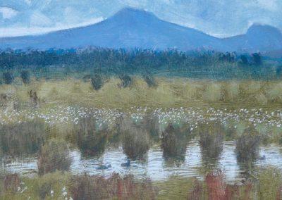 Flanders Moss by Darren Rees